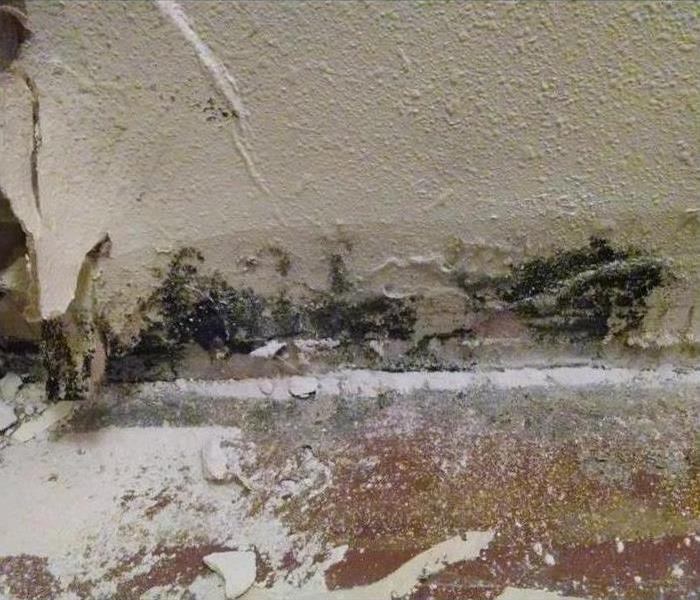 Crestwood Basement and Mold