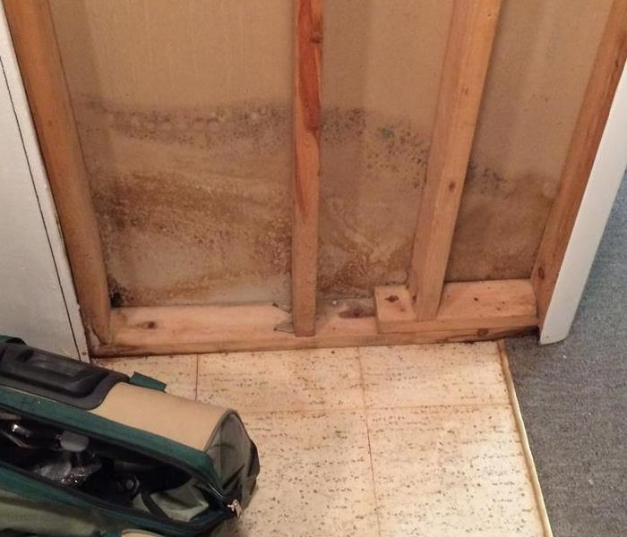 Office affected with Mold damage from water