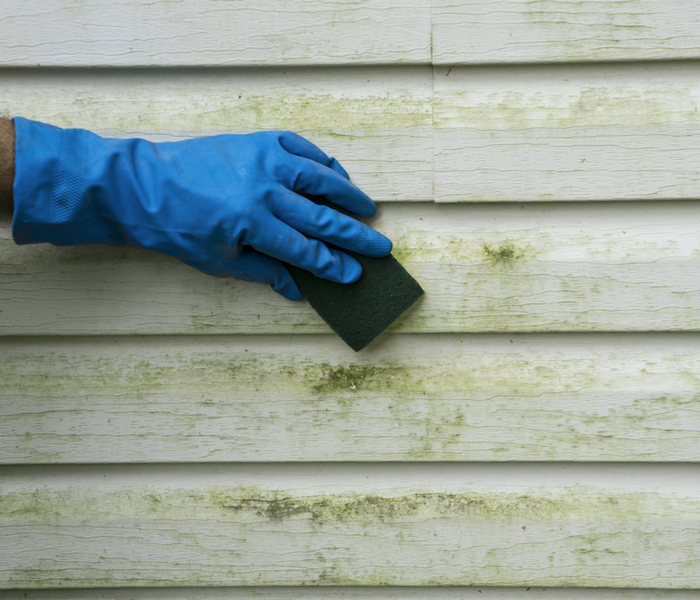 Mold Remediation Outdoor Mold Damage Issues