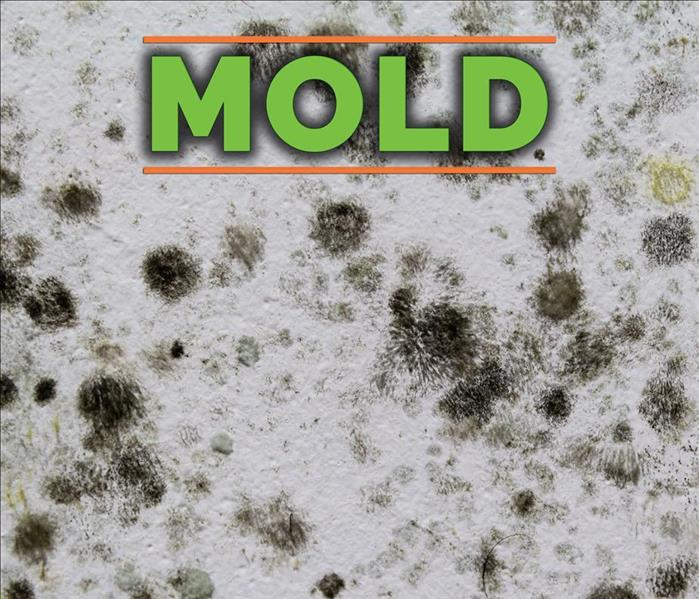 Stachybotrys Atha, black mold